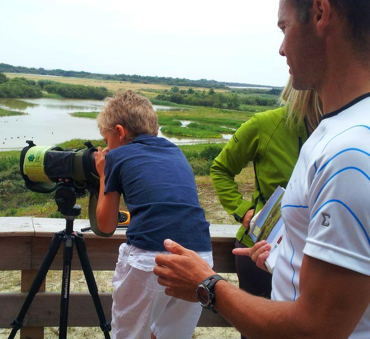 Au cœur de la réserve naturelle de la Baie de Somme : Le Parc du Marquenterre