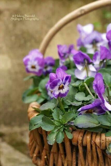 Beautiful flowers in a basket – #Bacafleurspourl'ete #Havredepaixjardin #Jardini…