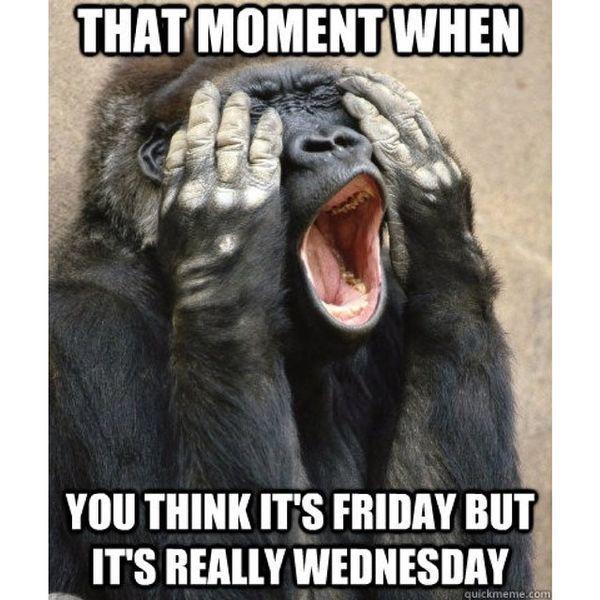 36 Funny Happy Wednesday Memes Funny Good Morning Memes Morning Quotes Funny Wednesday Memes
