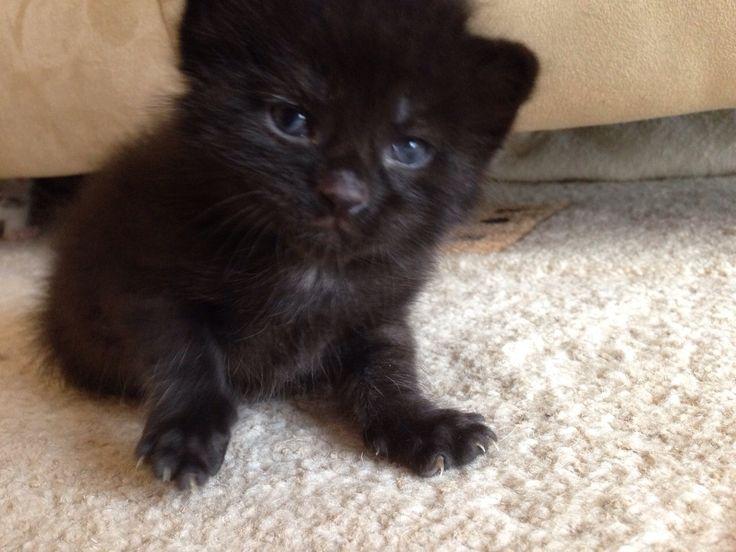 meine kleine Hera ca 4 Wochen alt.