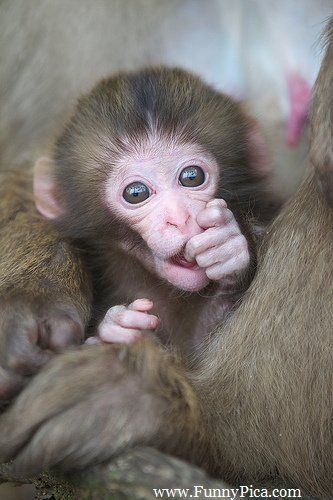 Funny Monkeys – Funny Monkey Picture 005 (FunnyPica.com)