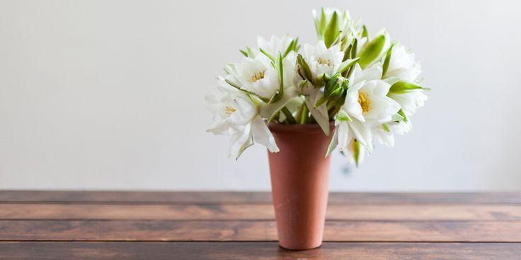 terracotta planter   water lilies www.smallissues.ro
