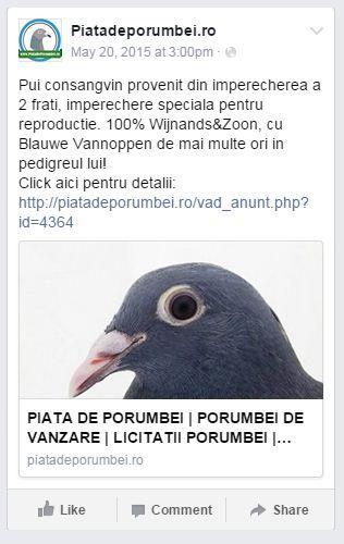 Vezi ofertele noastre pe www.piatadeporumbei.ro sau urmareste-ne pe pagina noastra de Facebook!