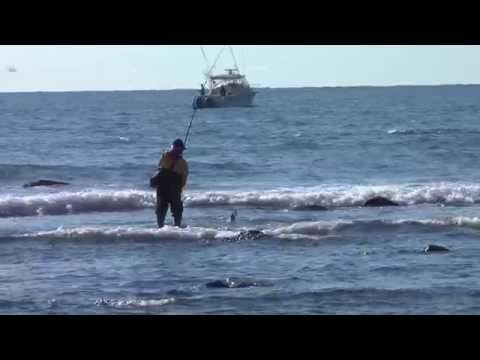 446 best surf fishing images on pinterest fishing stuff for Surf fishing for stripers
