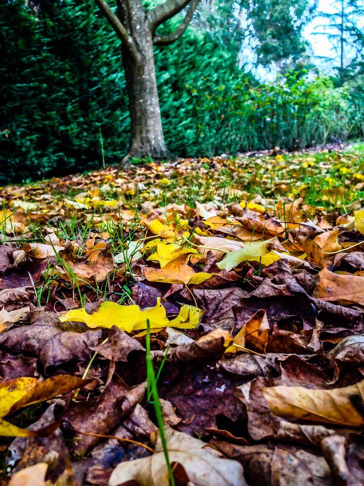 Autumn in the Yarra Valley.