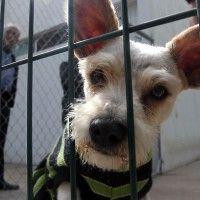 #dogalize En Guadalajara perros maltratados buscan una nueva vida #dogs #cats #pets