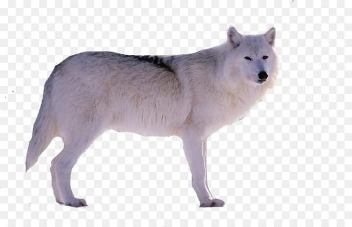 قد يكون النمر والأسد أكثر قوة ولكن الذئب لا يقدم عروضا في السيرك Animals Kangaroo