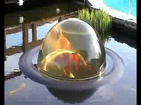 Koi Pearl Youtube How Cool Is This They Can Swim Up From The Pond To Where You Can See