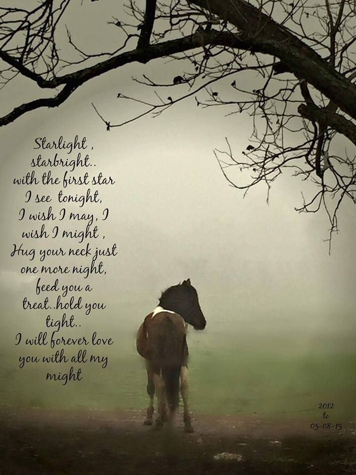 ♥ Starlight, starbright, with the first star I see tonight.  I wish I may, I wish I might, Hug your neck just one more night, feed you a treat, hold you tight.  I will forever love you with all my might!