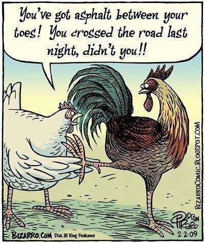 Hen Pecked LOL