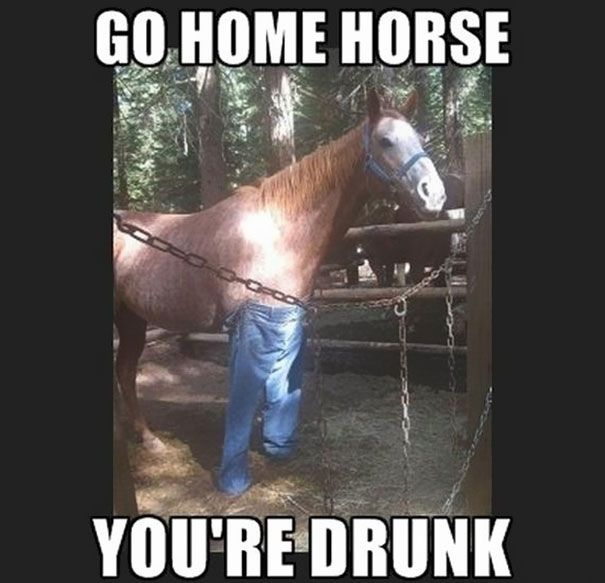 #gohome #horse