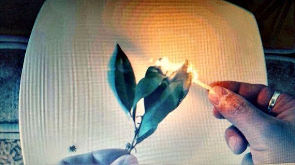 Acender esta folha e aspirar sua fumaça descongestiona vias respiratórias e alivia dores de cabeça | Cura pela Natureza