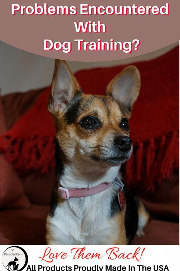 Pin On Obediences And Potty Training For Dogs