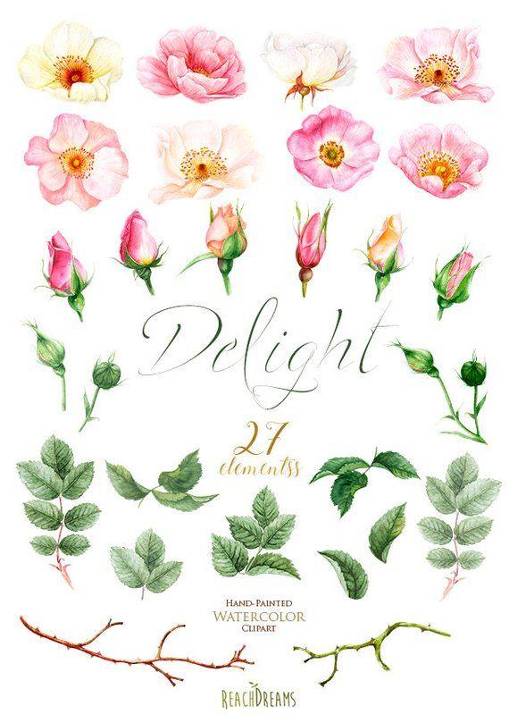Watercolor flowers simple. Roses floral elements boho