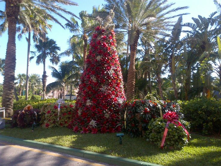 Christmas tree made out of Bromeliads - Atlantis Resort, Paradise Island Bahamas http://www.atlantis.com/default.aspx