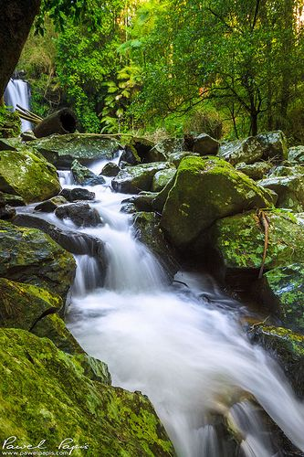 This is another take on Curtis Falls in Tamborine Mountain, QLD. Photo by Pawel Papis Photography.