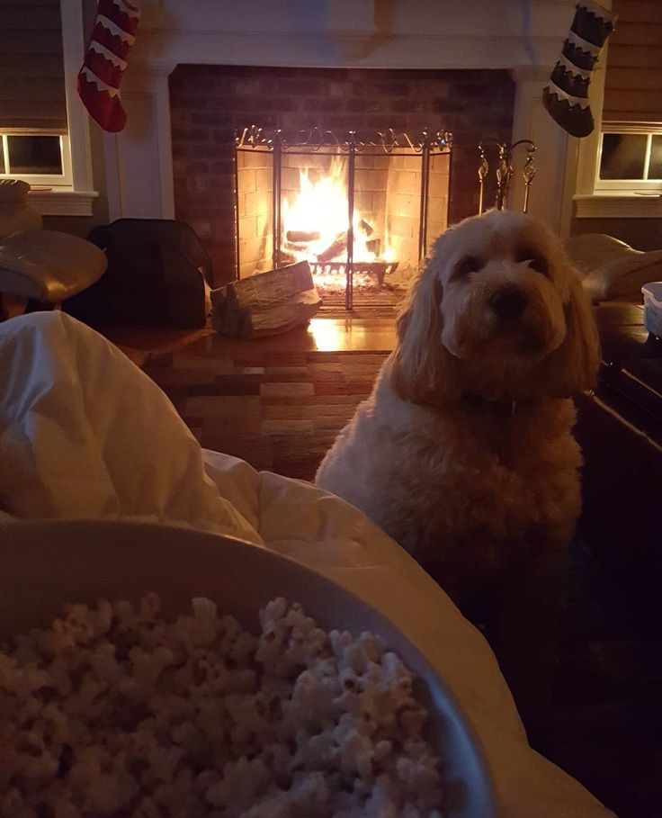 Ah.. Spending time with family on a chilly Friday eve. This is #heavenonearth to me. #homeiswheretheheartis #popcorn loving #pooch #goldendoodle
