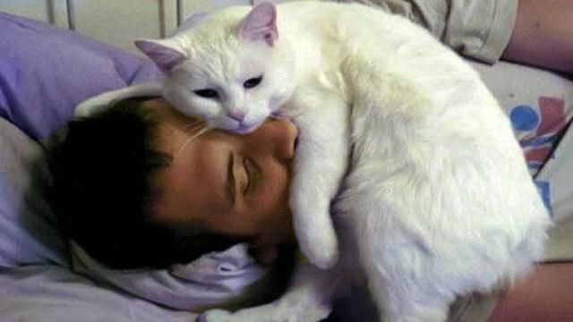 Pet Planet Sweet Cat Morning Call Wake Up And Play With Me
