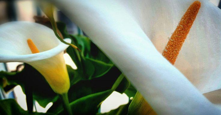 """Calle sul balcone. """"Ci sono fiori dappertutto per chi è capace di vederli."""" (Matisse)"""