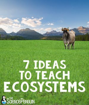 Here are 7 FUN ideas to teach your students about ecosystems and food chains!  Watch video clips, design an aquarium, use task cards, identify biotic and abiotic elements of ecosystems, make a life size food web, study vocabulary, and complete station activities.  Free printables included!