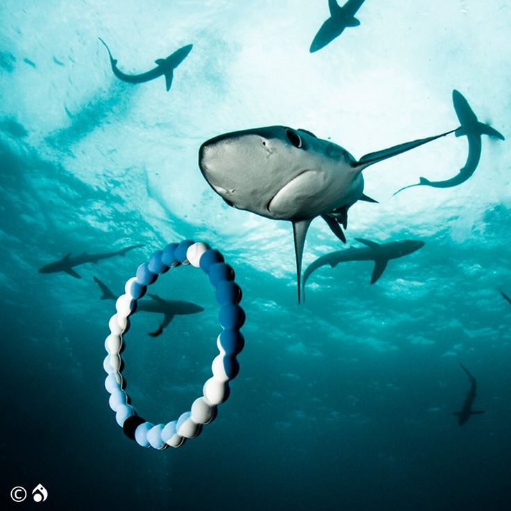 Shark Lokai Bracelet In Support of Oceana. In honor of Shark Week, we are partnering with Discovery Channel to help restore the ocean's balance. Together we have created the new limited-edition Shark Lokai. The proceeds of the Shark Lokai will support Oceana, an organization dedicated to protecting and restoring the world's oceans.