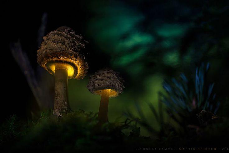 champignons-lumiere