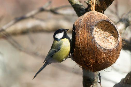 Jak v zimě pohostit venkovní ptactvo? Lojovou kouli zvládnete vyrobit sami | Nazeleno.cz