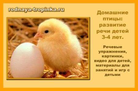 """""""Домашние птицы"""""""