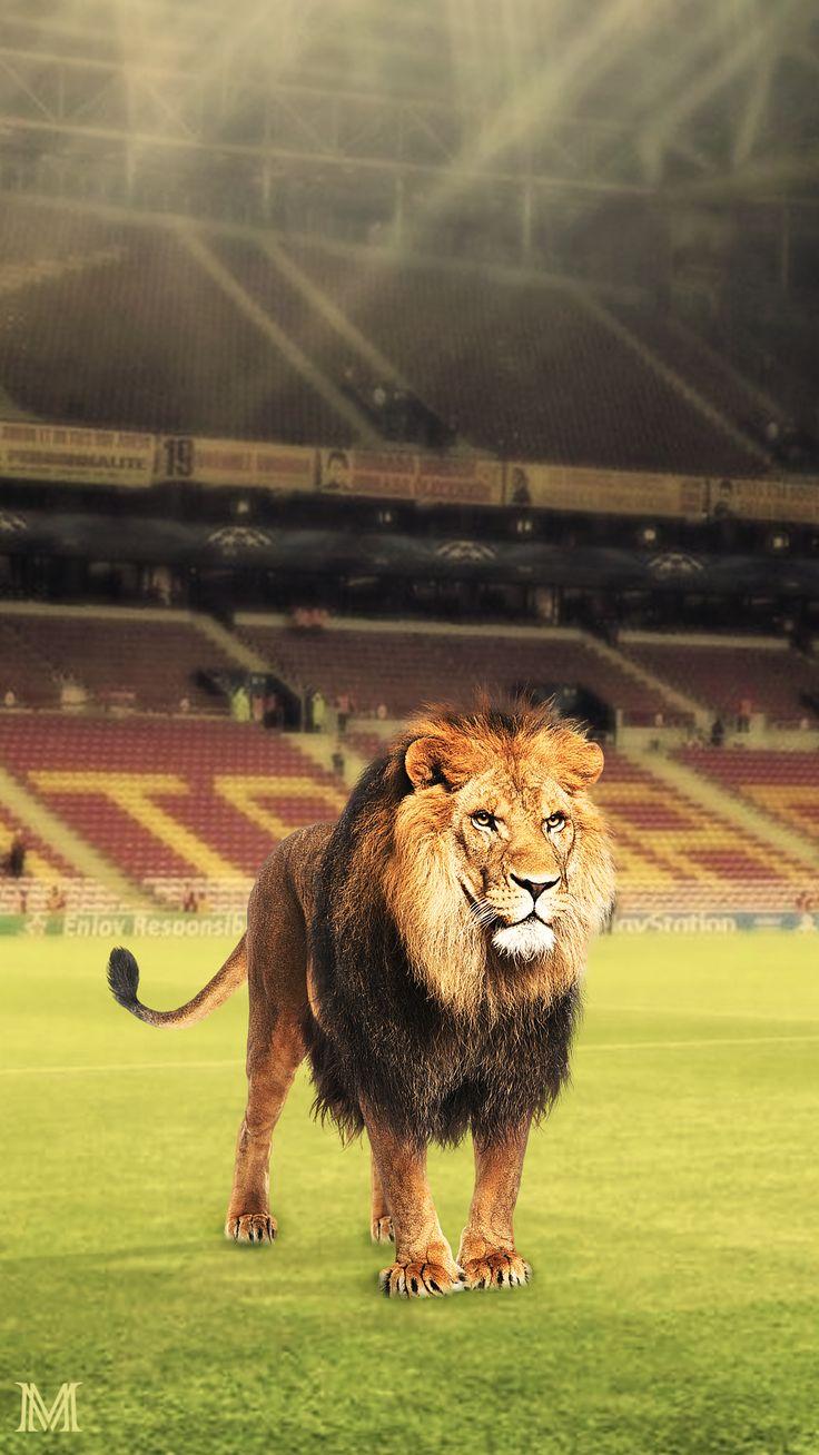 #galatasaray #cimbom #nike #turkey #footballteam #myteam #4yıldız #sarıkırmızı #arma #parçalı #1905 #kral #aslan #lion #ilklerin #ve #enlerin #takımı #champions #şampiyon #adında #gururun #saklı #renklerinde #asalet #sensiz #olmaz #rütbeni #bileceksin #alisamiyen #aslan #lion #roar