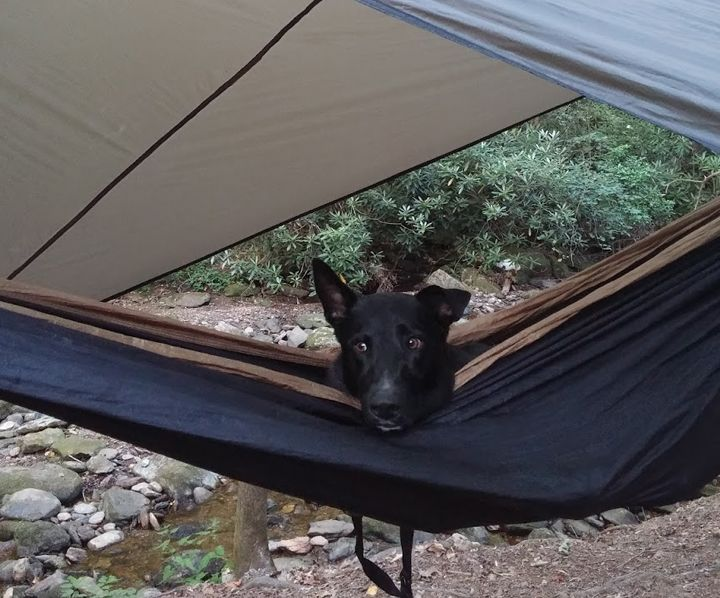Spending time outdoors is a way of life for many dog owners and pets. But if you're into camping hammocks, you may want to keep a few things in mind before you hit the trails with your furry friend.