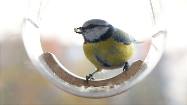 Bird feeder Tweet Resto Bar from Uczarczyk. Model: TUBE Transparent, hanging window bird feeders, innovative and modern. Suitable ONLY for small birds like: sparrows, titmoueses, grosbeaks http://uczarczyk.pl/projects/storybird/