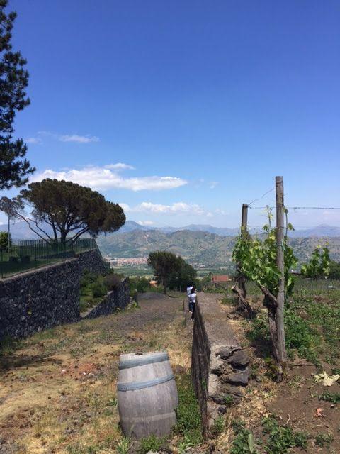 joanheaton519blog: Wine Tasting at the Gambino Winery