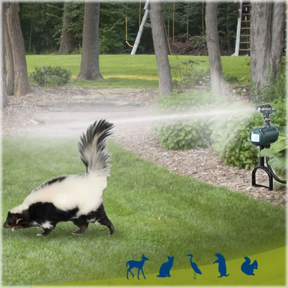This motion-activated sprinkler repells basically all outdoor critters from your garden/yard safely and humanely with just water and noise! Works for deer, raccoons, groundhogs, skunks, rabbits, etc.