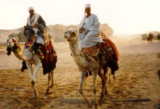 Bedouin- a nomadic Arab who lives in the Arabian Syrian or North Africa deserts