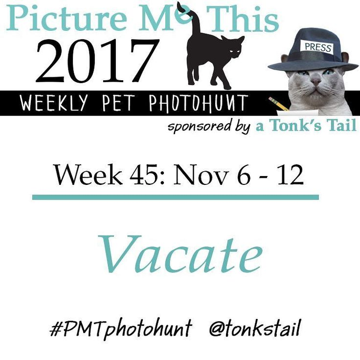 WEEK 45 #photohunt theme: VACATE. Calling all #pet lovers! #cat #dog #rabbit #ferret all join in! Posted ea Sunday @ 10AM CST. Use #PMTphotohunt so fellow hunters can find you! Preview upcoming themes @ http://bit.ly/PicMeThis #fun #games #photography
