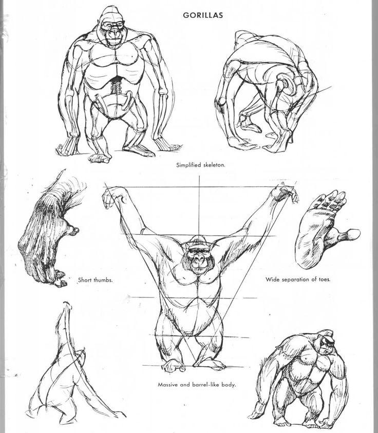 984 best Monkey Faces images on Pinterest | Animal anatomy, Gorilla ...