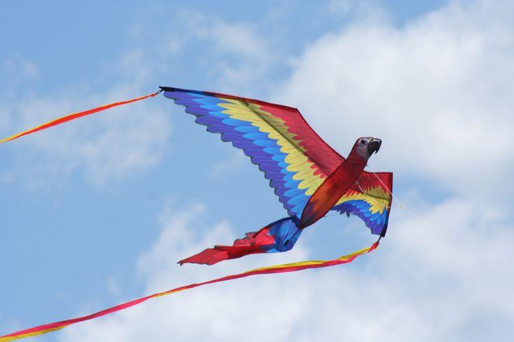 burlington's kite festival - kite