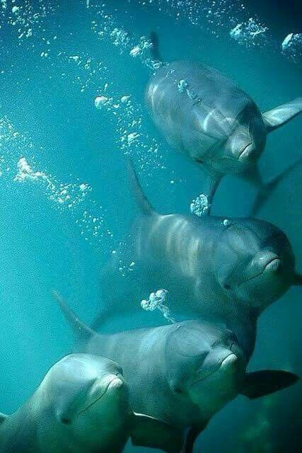 Dolphins were my favorite animal when I was young. Definitely still up there in the ranks lol. Brilliant creatures.