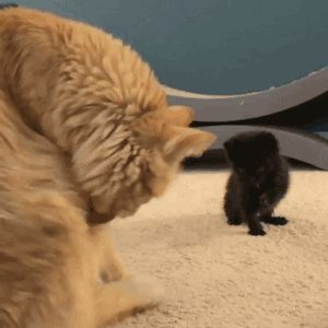 Awww it takes it a little while to realize it needs to lick it's paw first.