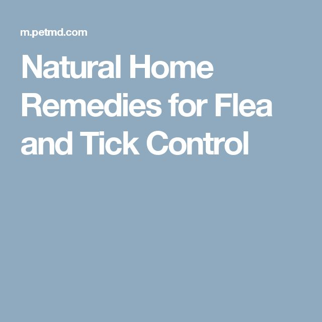 Natural Homemade Remedy For A Dog S Cough