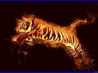 Tiger Fire Wallpaper 5812 High Quality