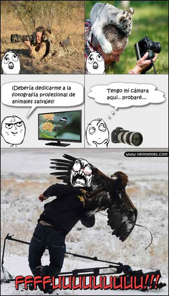 ★★★★★ Memes chistosos para comentar: Fotógrafo de animales salvajes I➨…