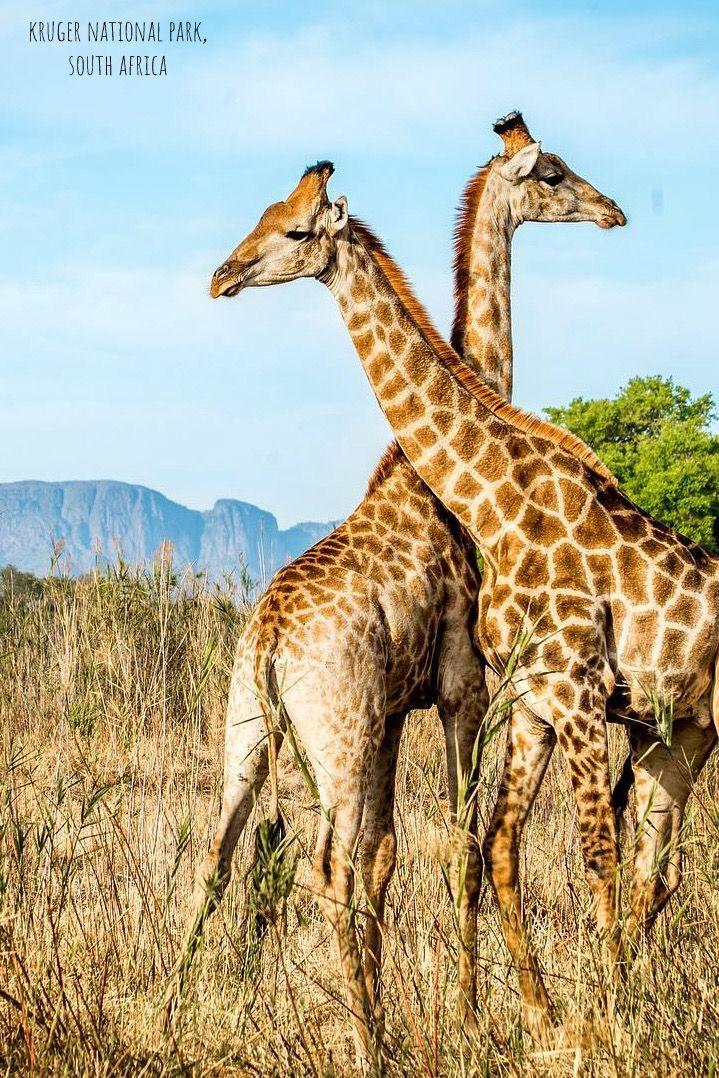 Kruger National Park In South Africa Animals Wild Animals Pet Birds