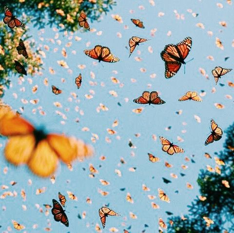 Mar 16, 2021 · butterfly aesthetic purple iphone wallpapers butterflies pastel cloud screensaver backgrounds desktop disney trippy flowers drawing. Pin by Ava HARRIS on V S C O   Spring aesthetic, Pretty