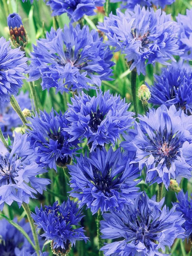 3543 best flower names a to z. images on pinterest | flowers