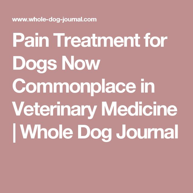 Pain Treatment for Dogs Now Commonplace in Veterinary Medicine | Whole Dog Journal