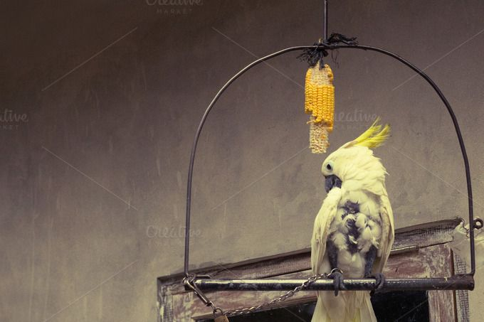 White Parrot on a Perch by Karolis Masilionis on @creativemarket