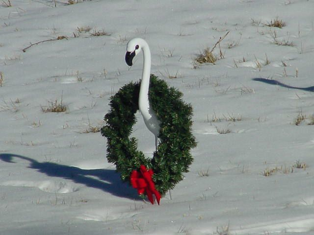 17 Best Images About Flamingo Christmas On Pinterest