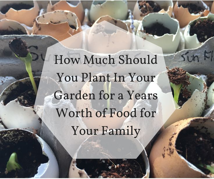 1000 images about Gardening Ideas – What Should I Plant in My Garden