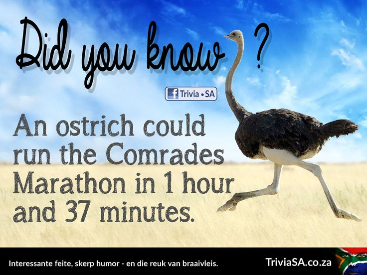 "An ostrich could run the Comrades Marathon in 1 hour and 37 minutes. (This ""did you know"" card was designed by AdSpark: http://adspark.co.za)"